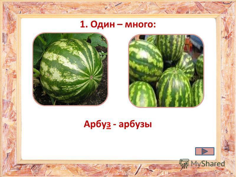 Арбуз - арбузы 1. Один – много: