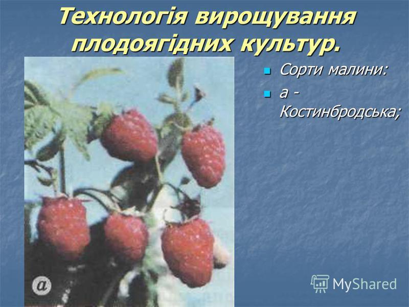 Сорти малини: Сорти малини: а - Костинбродська; а - Костинбродська; Технологія вирощування плодоягідних культур.