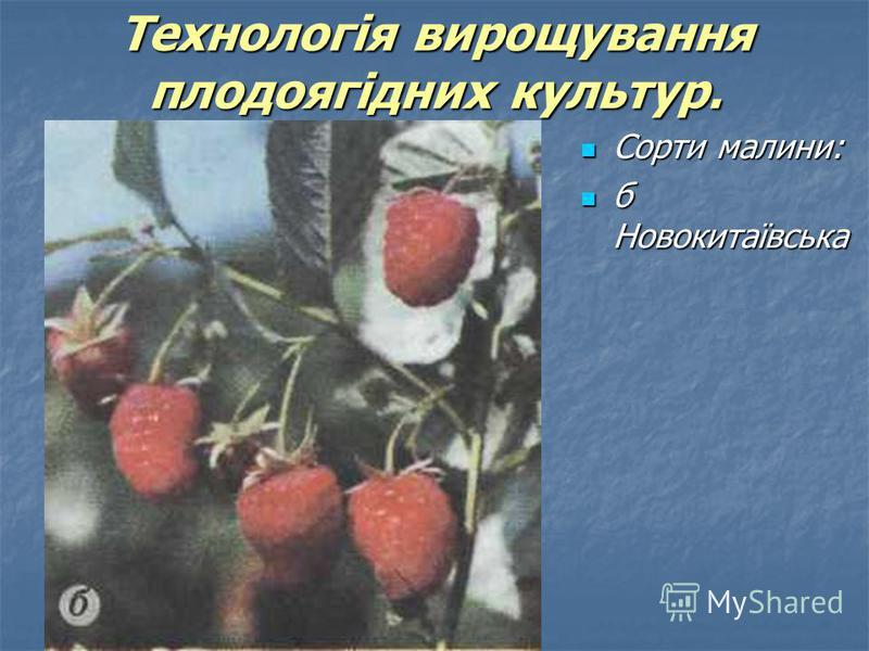 Сорти малини: Сорти малини: б Новокитаївська б Новокитаївська Технологія вирощування плодоягідних культур.