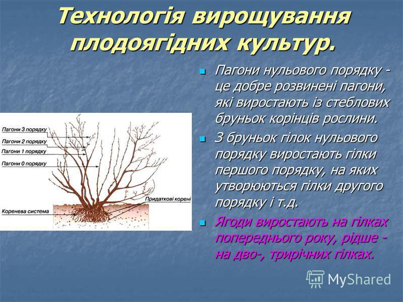 Пагони нульового порядку - це добре розвинені пагони, які виростають із стеблових бруньок корінців рослини. Пагони нульового порядку - це добре розвинені пагони, які виростають із стеблових бруньок корінців рослини. З бруньок гілок нульового порядку