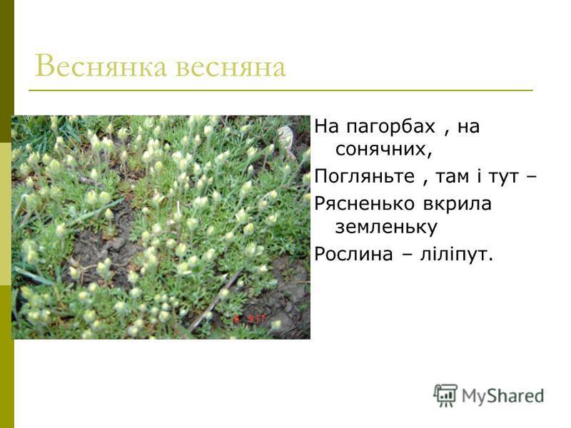 Веснянка весняна На пагорбах, на сонячних, Погляньте, там і тут – Рясненько вкрила земленьку Рослина – ліліпут.