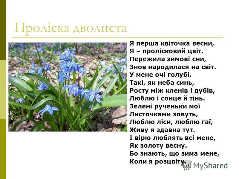 Проліска дволиста Я перша квіточка весни, Я – пролісковий цвіт. Пережила зимові сни, Знов народилася на світ. У мене очі голубі, Такі, як неба синь, Росту між кленів і дубів, Люблю і сонце й тінь. Зелені рученьки мої Листочками зовуть, Люблю ліси, лю