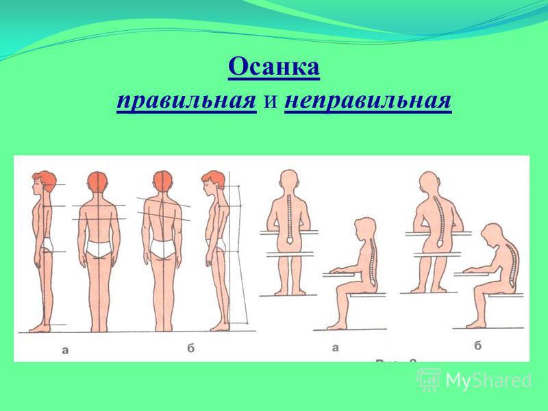 Упражнения для груди и осанки