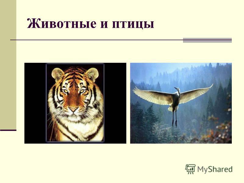 В природе в основном встречается вертикальный вид осевой симметрии