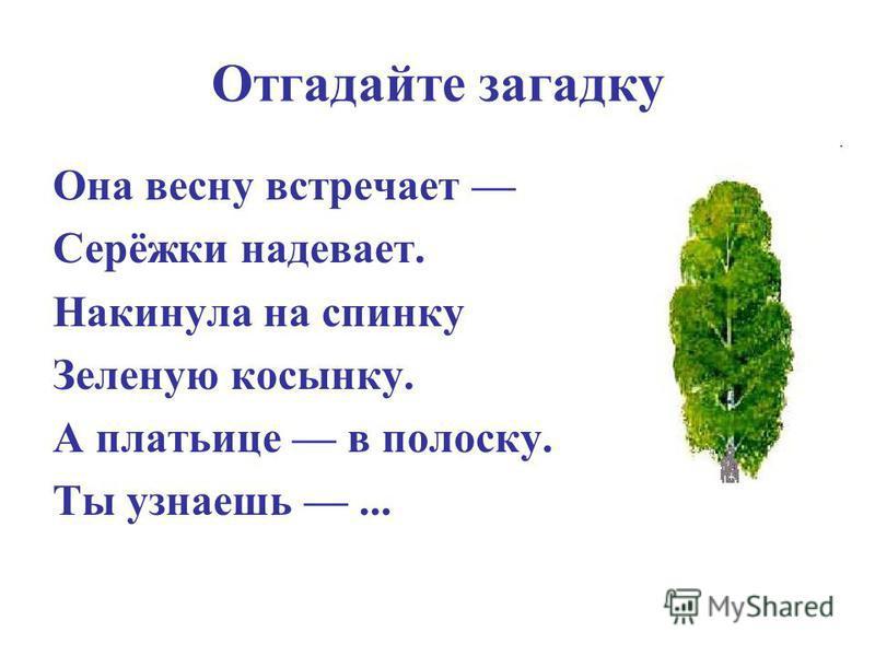 РОДИНА ׳
