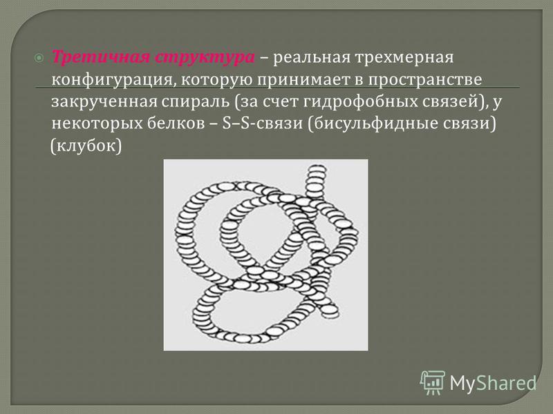 Третичная структура – реальная трехмерная конфигурация, которую принимает в пространстве закрученная спираль ( за счет гидрофобных связей ), у некоторых белков – S–S- связи ( дисульфидные связи ) ( клубок )
