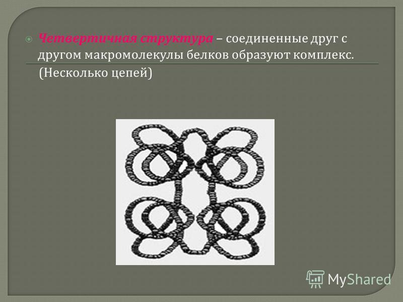 Четвертичная структура – соединенные друг с другом макромолекулы белков образуют комплекс. ( Несколько цепей )