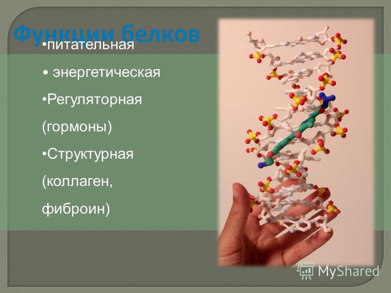 Функции белков питательная энергетическая Регуляторная (гормоны) Структурная (коллаген, фиброин)