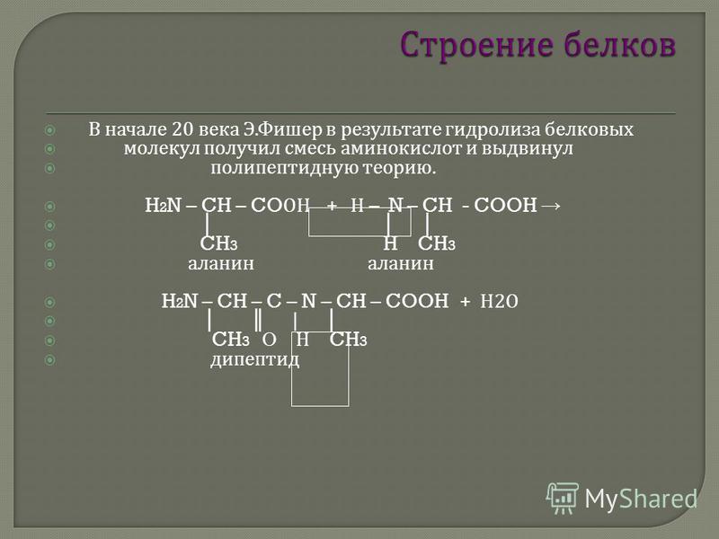 В начале 20 века Э. Фишер в результате гидролиза белковых молекул получил смесь аминокислот и выдвинул полипептидную теорию. H 2 N – CH – CO ОН + Н – N – CH - COOH CH 3 H CH 3 аланин аланин H 2 N – CH – C – N – CH – COOH + Н 2 О | CH 3 О Н CH 3 дипеп