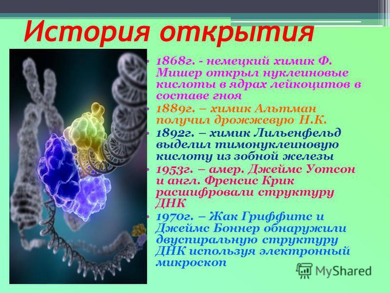 История открытия 1868 г. - немецкий химик Ф. Мишер открыл нуклеиновые кислоты в ядрах лейкоцитов в составе гноя 1889 г. – химик Альтман получил дрожжевую Н.К. 1892 г. – химик Лильенфельд выделил тимонуклеиновую кислоту из зобной железы 1953 г. – амер