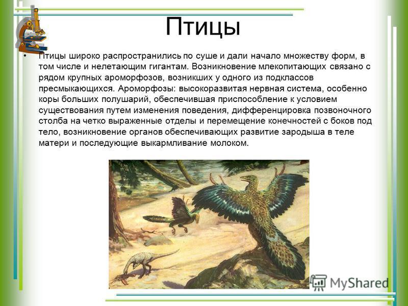 Птицы Птицы широко распространились по суше и дали начало множеству форм, в том числе и нелетающим гигантам. Возникновение млекопитающих связано с рядом крупных ароморфозов, возникших у одного из подклассов пресмыкающихся. Ароморфозы: высокоразвитая