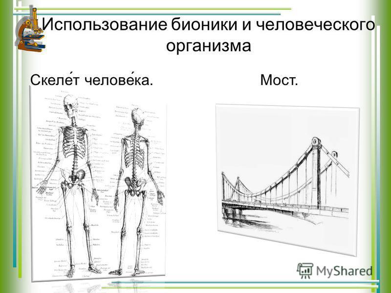 Использование бионики и человеческого организма Скеле́т челове́ка. Мост.