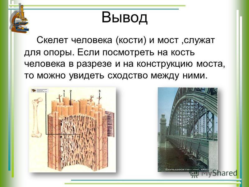 Вывод Скелет человека (кости) и мост,служат для опоры. Если посмотреть на кость человека в разрезе и на конструкцию моста, то можно увидеть сходство между ними.