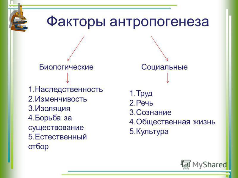 Факторы антропогенеза Биологические Социальные 1. Наследственность 2. Изменчивость 3. Изоляция 4. Борьба за существование 5. Естественный отбор 1. Труд 2. Речь 3. Сознание 4. Общественная жизнь 5.Культура