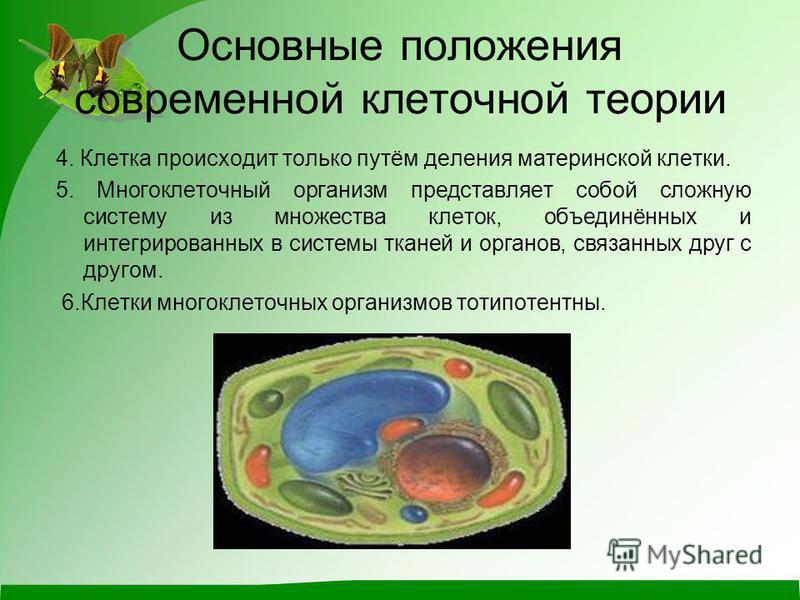 Основные положения современной клеточной теории 4. Клетка происходит только путём деления материнской клетки. 5. Многоклеточный организм представляет собой сложную систему из множества клеток, объединённых и интегрированных в системы тканей и органов
