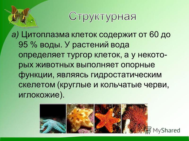 а) Цитоплазма клеток содержит от 60 до 95 % воды. У растений вода определяет тургор клеток, а у некото рых животных выполняет опорные функции, являясь гидростатическим скелетом (круглые и кольчатые черви, иглокожие).