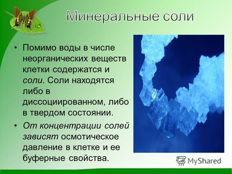 Помимо воды в числе неорганических веществ клетки содержатся и соли. Соли находятся либо в диссоциированном, либо в твердом состоянии. От концентрации солей зависят осмотическое давление в клетке и ее буферные свойства.