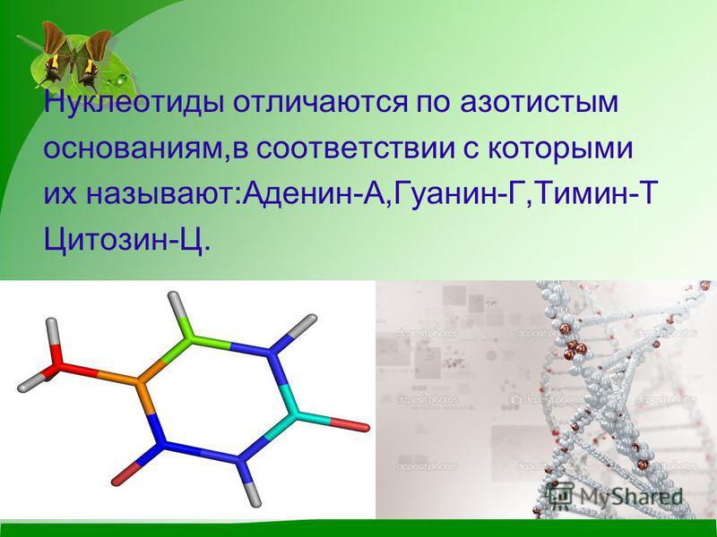 Нуклеотиды отличаются по азотистым основаниям,в соответствии с которыми их называют:Аденин-А,Гуанин-Г,Тимин-Т Цитозин-Ц.