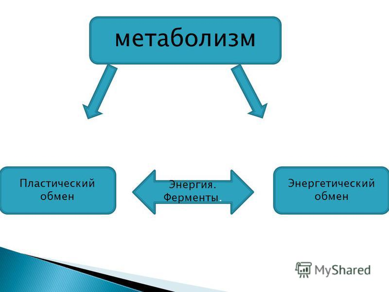 метаболизм Пластический обмен Энергетический обмен Энергия. Ферменты.