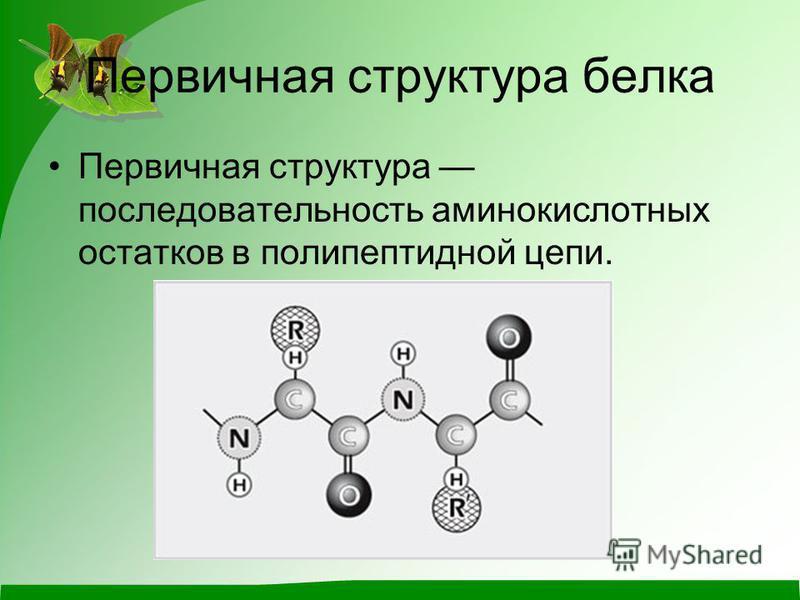 Первичная структура белка Первичная структура последовательность аминокислотных остатков в полипептидной цепи.