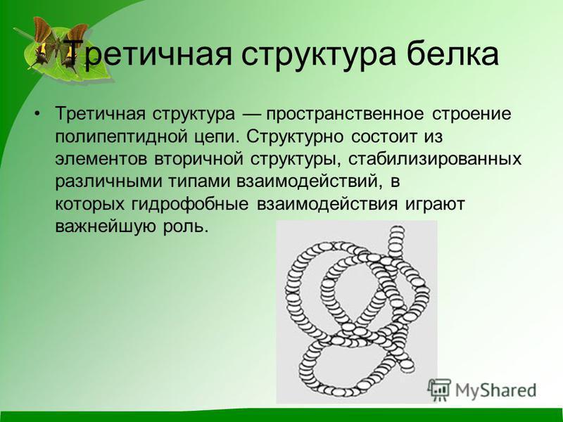 Третичная структура белка Третичная структура пространственное строение полипептидной цепи. Структурно состоит из элементов вторичной структуры, стабилизированных различными типами взаимодействий, в которых гидрофобные взаимодействия играют важнейшую