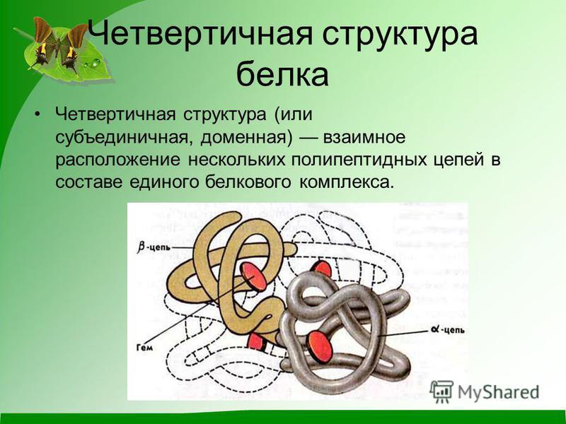 Четвертичная структура белка Четвертичная структура (или субъединичная, доменная) взаимное расположение нескольких полипептидных цепей в составе единого белкового комплекса.