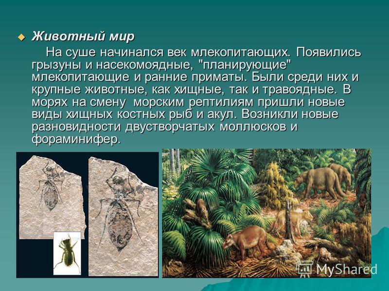 Животный мир Животный мир На суше начинался век млекопитающих. Появились грызуны и насекомоядные,