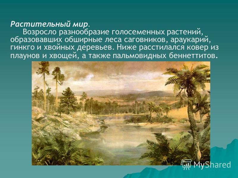 Растительный мир. Возросло разнообразие голосеменных растений, образовавших обширные леса саговников, араукарий, гинкго и хвойных деревьев. Ниже расстилался ковер из плаунов и хвощей, а также пальмовидных беннеттитов.