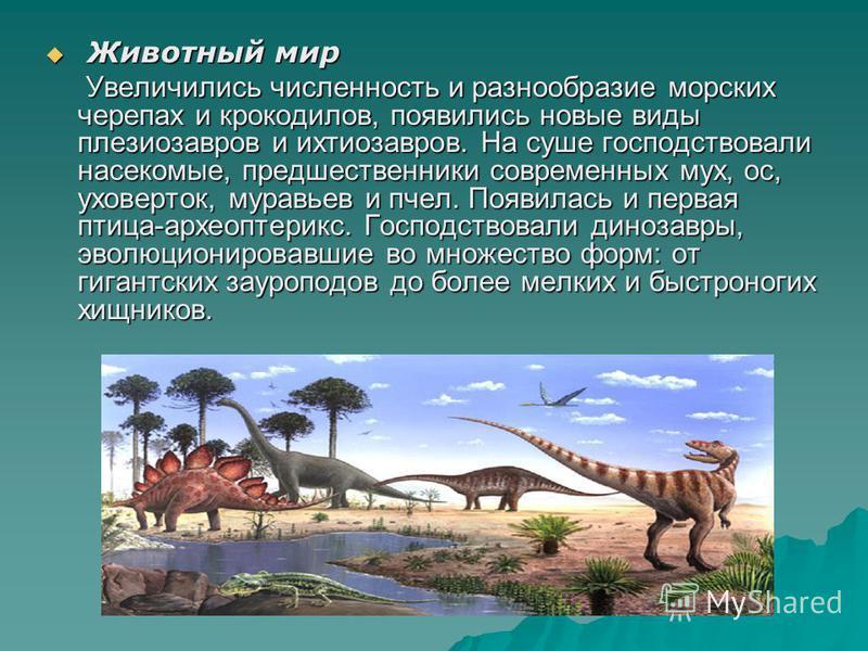 Животный мир Животный мир Увеличились численность и разнообразие морских черепах и крокодилов, появились новые виды плезиозавров и ихтиозавров. На суше господствовали насекомые, предшественники современных мух, ос, уховерток, муравьев и пчел. Появила