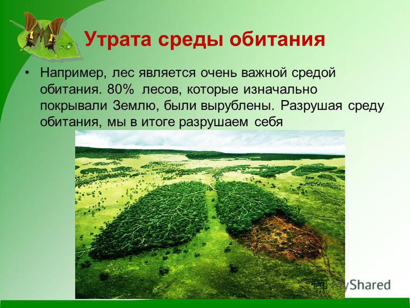 Например, лес является очень важной средой обитания. 80% лесов, которые изначально покрывали Землю, были вырублены. Разрушая среду обитания, мы в итоге разрушаем себя Утрата среды обитания