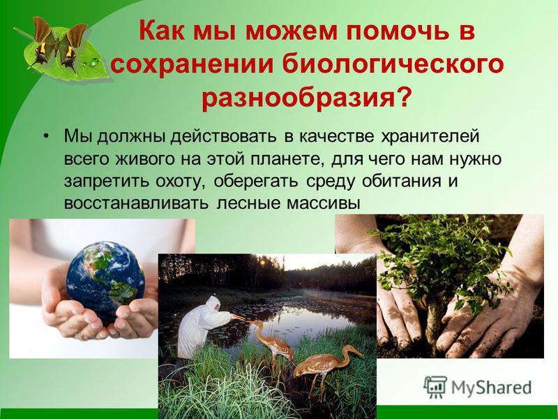 Как мы можем помочь в сохранении биологического разнообразия? Мы должны действовать в качестве хранителей всего живого на этой планете, для чего нам нужно запретить охоту, оберегать среду обитания и восстанавливать лесные массивы