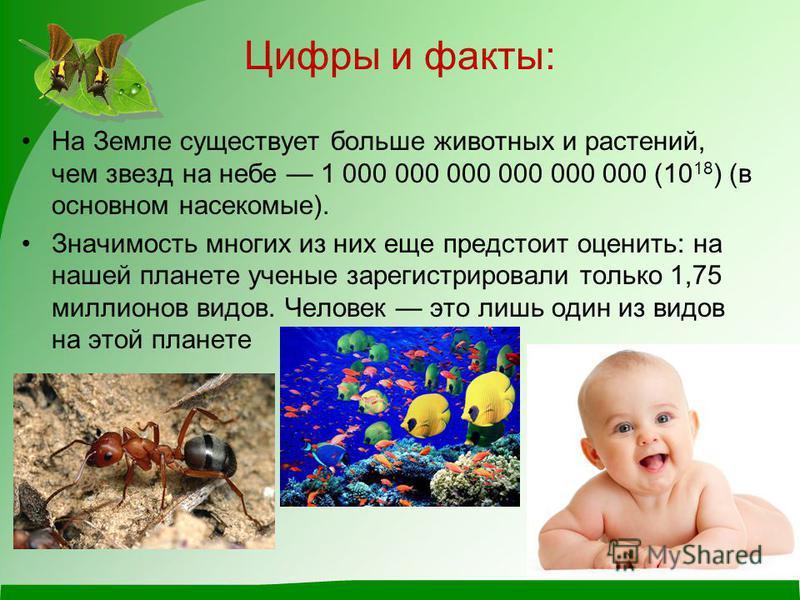Цифры и факты: На Земле существует больше животных и растений, чем звезд на небе 1 000 000 000 000 000 000 (10 18 ) (в основном насекомые). Значимость многих из них еще предстоит оценить: на нашей планете ученые зарегистрировали только 1,75 миллионов