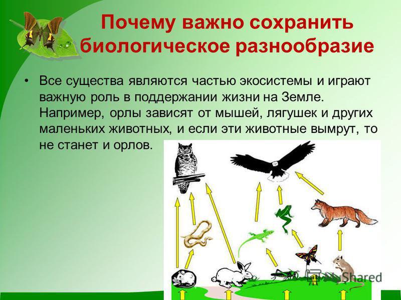 Почему важно сохранить биологическое разнообразие Все существа являются частью экосистемы и играют важную роль в поддержании жизни на Земле. Например, орлы зависят от мышей, лягушек и других маленьких животных, и если эти животные вымрут, то не стане