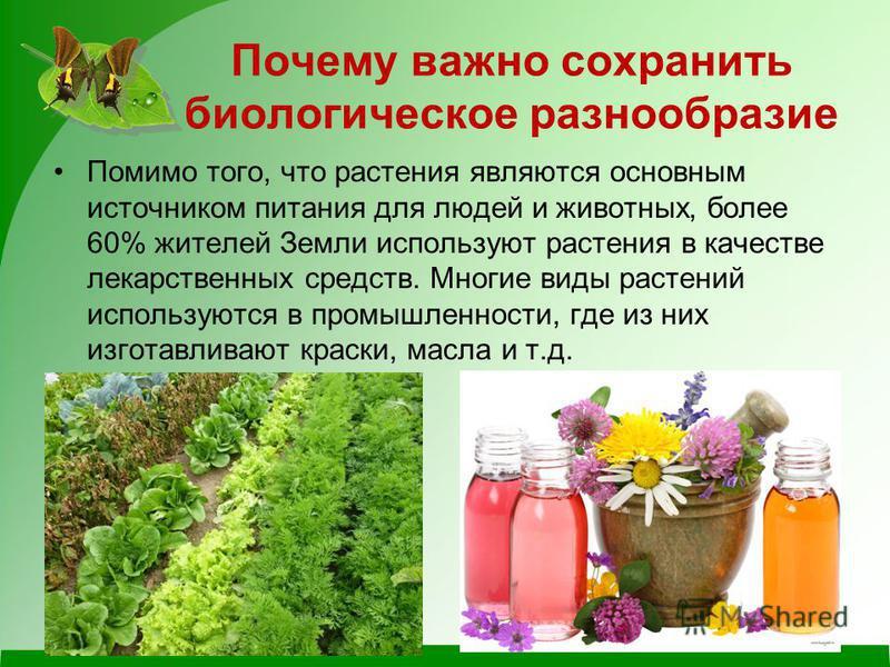 Почему важно сохранить биологическое разнообразие Помимо того, что растения являются основным источником питания для людей и животных, более 60% жителей Земли используют растения в качестве лекарственных средств. Многие виды растений используются в п