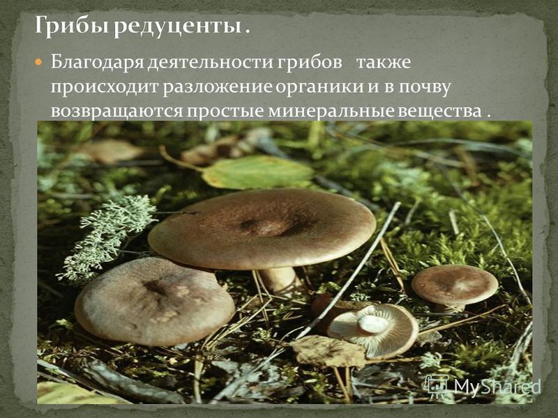 Благодаря деятельности грибов также происходит разложение органики и в почву возвращаются простые минеральные вещества.