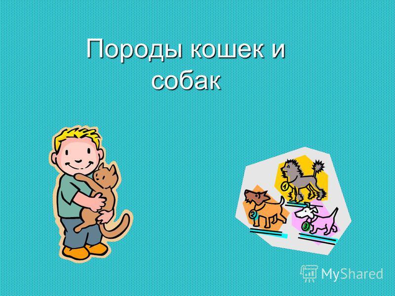 Породы кошек и собак