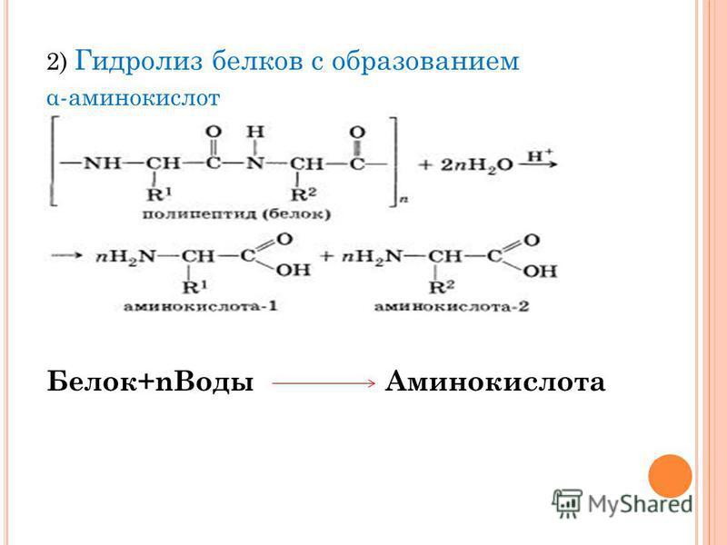 2) Гидролиз белков с образованием α-аминокислот Белок+n Воды Аминокислота