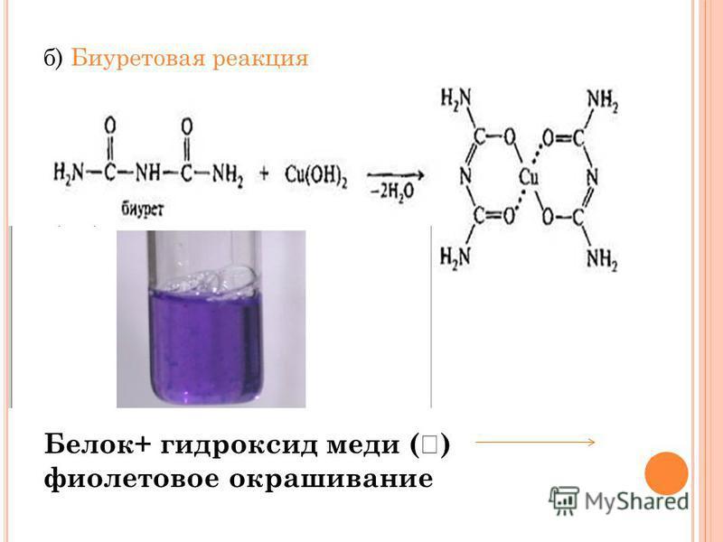 б) Биуретовая реакция Белок+ гидроксид меди ( ) фиолетовое окрашивание