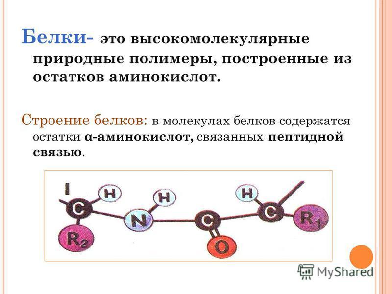 Белки- это высокомолекулярные природные полимеры, построенные из остатков аминокислот. Строение белков: в молекулах белков содержатся остатки α-аминокислот, связанных пептидной связью.
