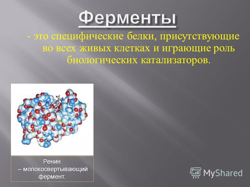 - это специфические белки, присутствующие во всех живых клетках и играющие роль биологических катализаторов. Ренин – молокосвертывающий – молокосвертывающий фермент.