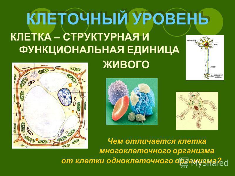 КЛЕТОЧНЫЙ УРОВЕНЬ КЛЕТКА – СТРУКТУРНАЯ И ФУНКЦИОНАЛЬНАЯ ЕДИНИЦА ЖИВОГО Чем отличается клетка многоклеточного организма от клетки одноклеточного организма?
