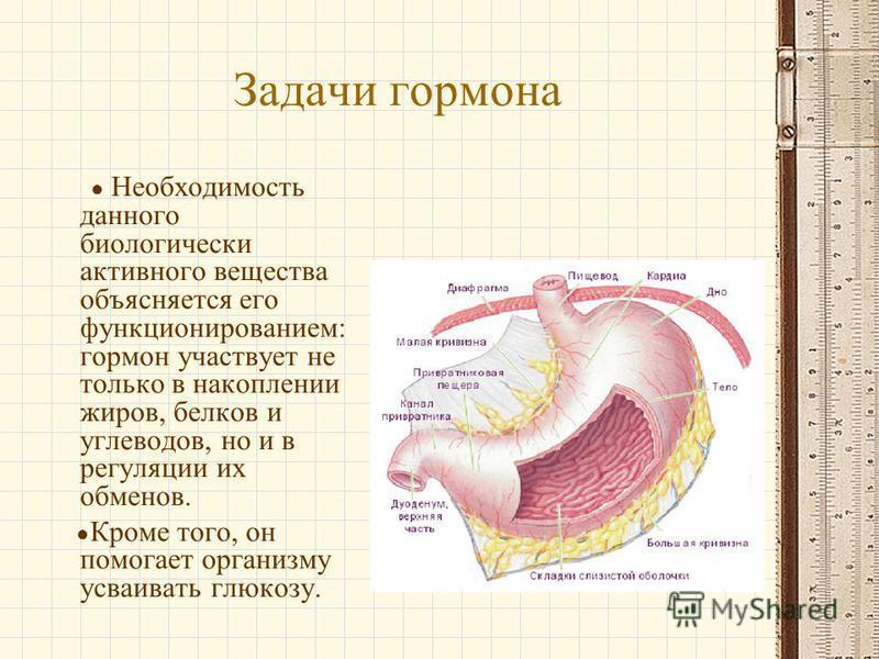 Задачи гормона Необходимость данного биологически активного вещества объясняется его функционированием: гормон участвует не только в накоплении жиров, белков и углеводов, но и в регуляции их обменов. Кроме того, он помогает организму усваивать глюкоз