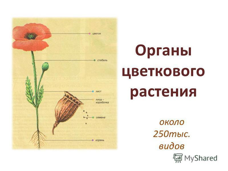 Органы цветкового растения около 250 тыс. видов