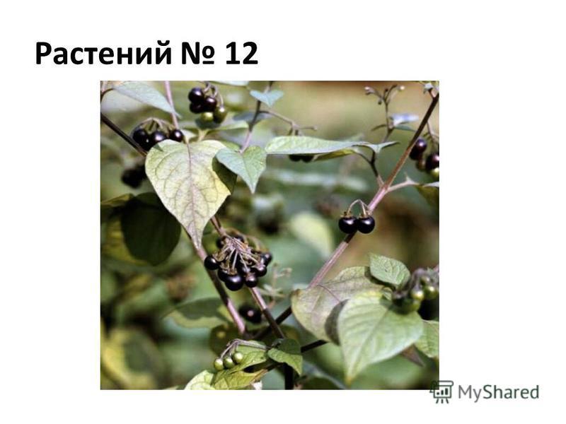 Растений 12