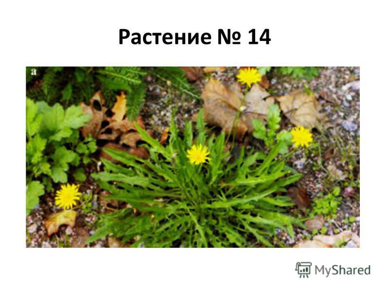 Растение 14