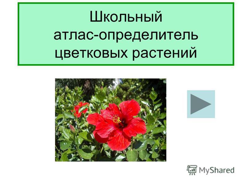 Школьный атлас-определитель цветковых растений