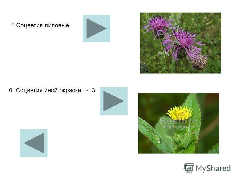 1. Соцветия лиловые 0. Соцветия иной окраски - 3