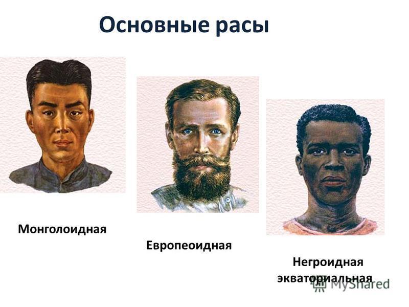 Основные расы Монголоидная Европеоидная Негроидная экваториальная