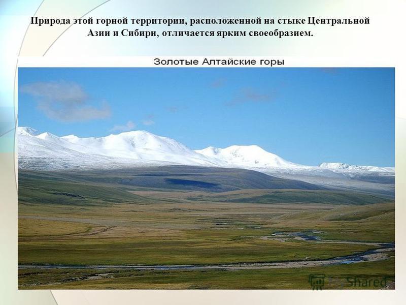 Природа этой горной территории, расположенной на стыке Центральной Азии и Сибири, отличается ярким своеобразием.