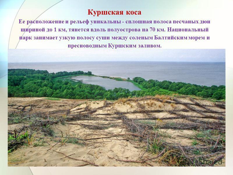Куршская коса Ее расположение и рельеф уникальны - сплошная полоса песчаных дюн шириной до 1 км, тянется вдоль полуострова на 70 км. Национальный парк занимает узкую полосу суши между соленым Балтийским морем и пресноводным Куршским заливом.